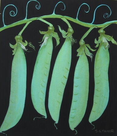5 Pea Pods  SOLD