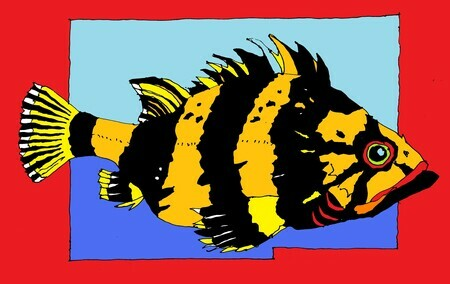 China Rockfish   SOLD (additional prints available on request)