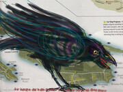 DUCOTE; South Pender Island Crow; digital painting