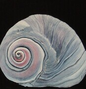 Moon Snail  SOLD