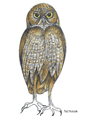 "TAYLOR; ; Burrowing Owl; ink drawing on paper mounted on wooden cradle, finished with resin; 4"" x 3"" SOLD"