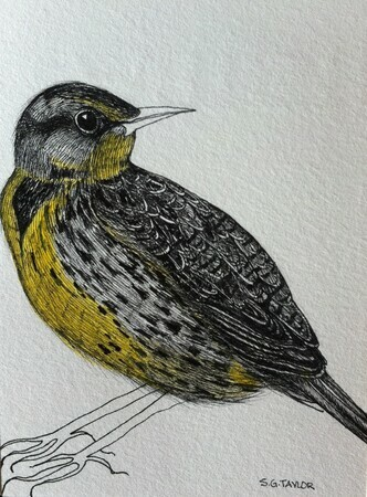 "TAYLOR; Meadowlark; ink drawing with watercolour, finished with resin; 4""x3""SOLD at Sooke Fine Arts Show, July 24, 2015"