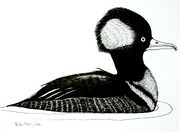 "TAYLOR; Merganser; ink drawing on paper mounted on wooden cradle, finished with resin; 3x4""; SOLD"
