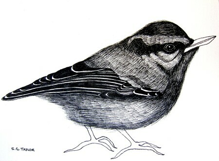 "TAYLOR; Nuthatch; ink drawing on paper mounted on wooden cradle, finished with resin; 3x4""; SOLD"