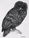 "TAYLOR, S.G.; A Wise Old Owl; ink drawing on paper, mounted on cradle, finished with resin, 4"" x 3"" SOLD"