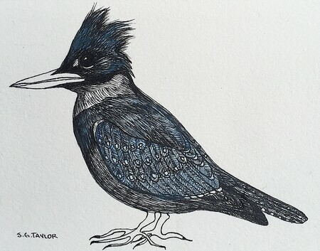 "TAYLOR, S.G.; Kingfisher; ink drawing on paper, mounted on cradle, finished with resin, 4"" x 3"" SOLD"