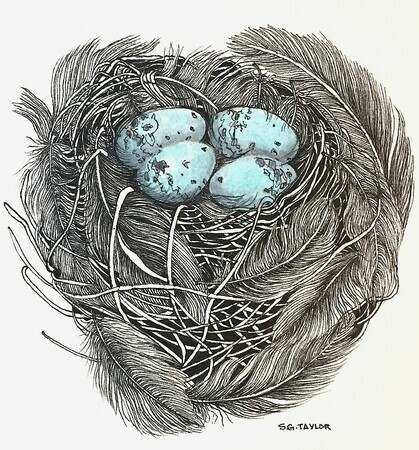 TAYLOR; She Built a Very Cozy Nest, ink and watercolour on paper SOLD