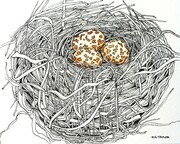 "TAYLOR; Small Nest #1; Rebirth; ink drawing on paper with w/c, mounted on wooden cradle, finished with resin; 3""x4"" SOLD, received Honorable Mention at FCA Show June 2015"