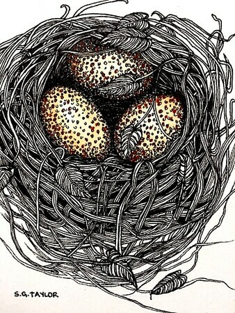 "TAYLOR; ; Small Nest: Her Eggs Were Speckled; ink drawing on paper mounted on wooden cradle, finished with resin; 4"" x 3"" SOLD"