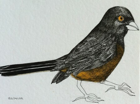"TAYLOR; Towhee; ink drawing on paper, stained, mounted on wooden cradle, finished with resin; 3""x4"""